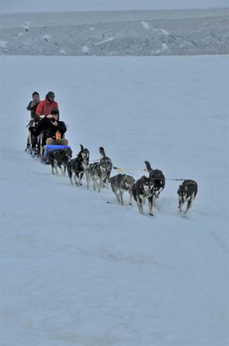 氷河で犬ぞり。