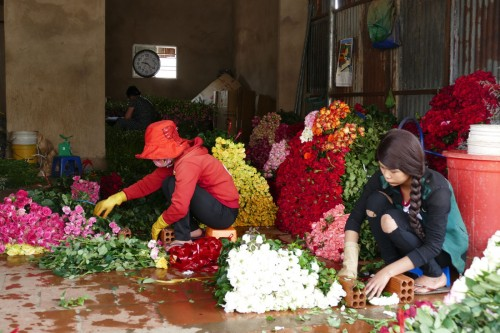 花を選別する作業員 (C)Azusa Shiraishi