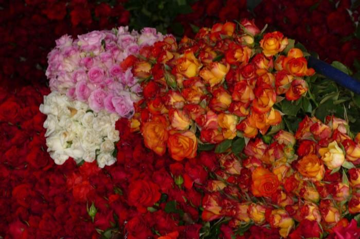 さまざまな色のバラ (C)Azusa Shiraishi