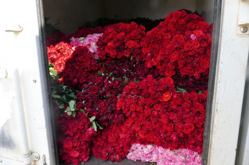軽トラックに積まれたバラの花束  (C)Azusa Shiraishi