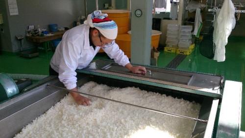 蒸米の放冷作業中の慎一さん。