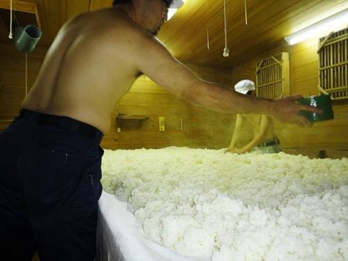 麹室にて麹菌の植付け中。