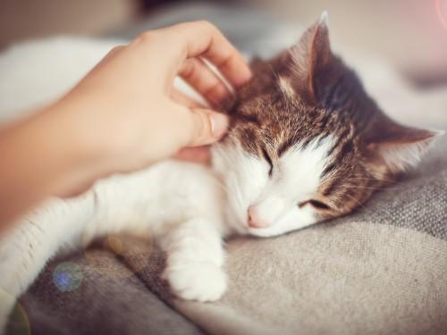 Woman petting a cat. Female caress pet