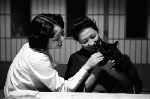 """文と玉、幸田家で飼われていた黒猫の""""お坊ボン"""""""