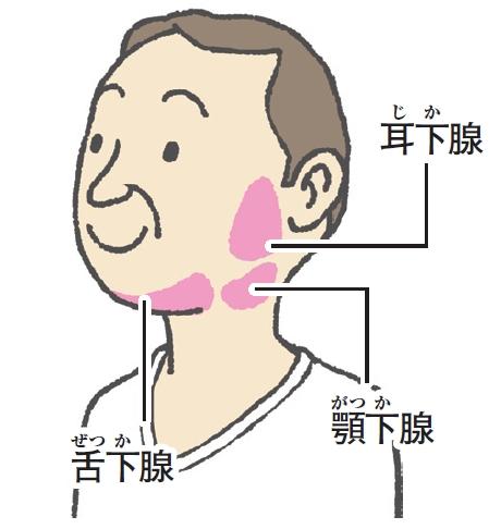 唾液腺 マッサージ