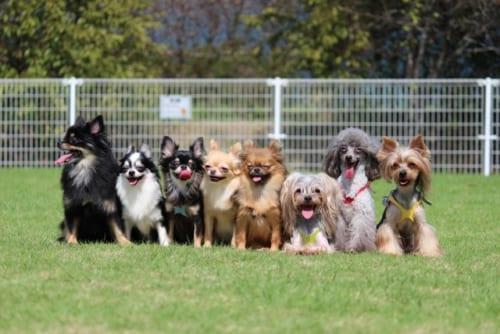 好きな犬種ランキング2018