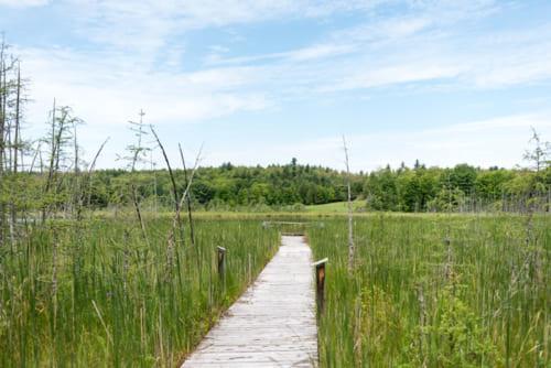 木製の遊歩道があり、保護区を散策できる
