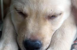 ウィーダはロケットペンダントに大好きな犬の写真を入れて身に着けていました