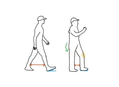 若年者と熟年者の歩行の違い
