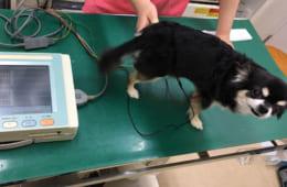 獣医師とコミュニケーションをとって納得できる検査を。