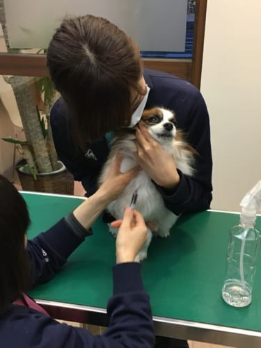 ペットの血液検査