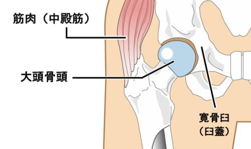 股関節とその周りにある筋肉