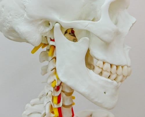 アゴと背骨は連動している|歯を食いしばると猫背に、ラックスしてアゴの力が抜けるとリラックスする