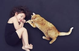 猫と人は家族や友人のように親しくなれるのか