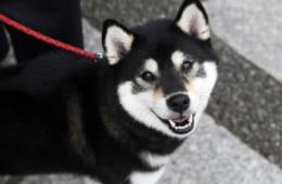 江戸時代の大ベストセラー|ペット飼育書から見た飼い主の意識と教養