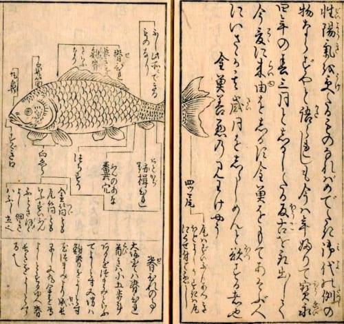 金魚養玩草(国立国会図書館アーカイブズ)の見どころは美しい挿絵