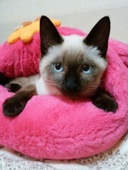 甘えん坊の猫さんに試してみてくださいね