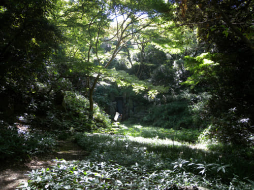「皇居吹上御苑の森」