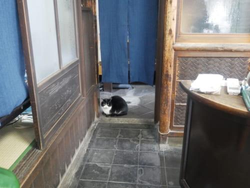 運がよければ、看板猫のまゆのすけくんが出迎えてくれます。