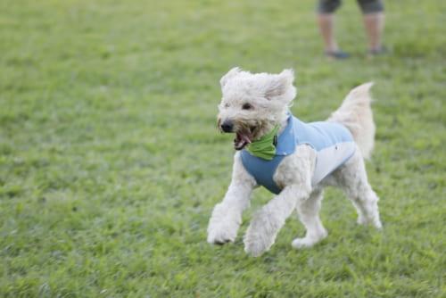 獣医さんが教える犬の肥満が危険な4つの理由