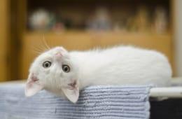 「ヤフオク!」で検索された「猫」を含むキーワードランキング