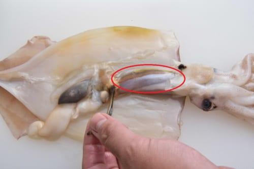 開いたら、わた(赤丸部分)を残し、内臓や墨袋(指でつまんでいる部分)、膜を取り除く。