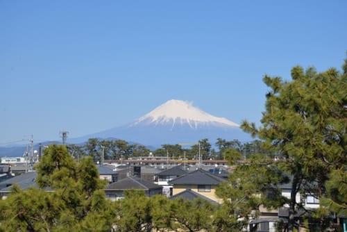 静岡市三保松原文化創造センターの屋上からの富士山。松とのコントラストが粋です。
