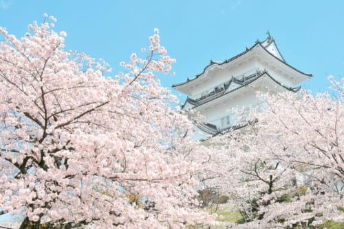 3位:小田原城址公園【神奈川県】