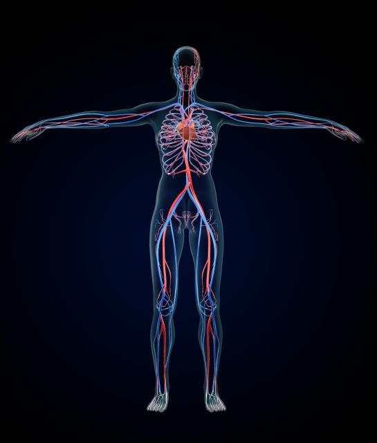 『すべての病気は血管で防げる!』