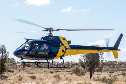 遊覧飛行のヘリコプター