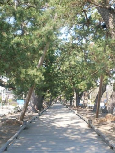 「神の道」は松の保全のため、ボードウォークになっています。