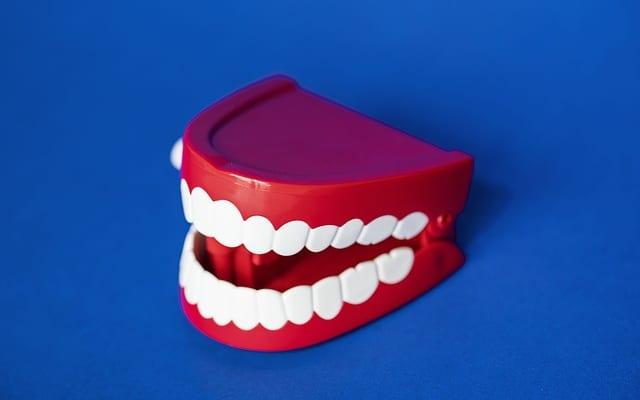 顎関節モード切り替えで、身体機能をチェンジ|本能の影響を強く受ける顎関節