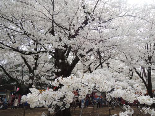 8位:大宮公園【埼玉県】