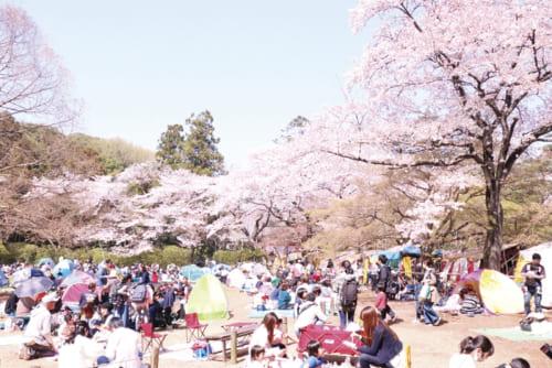4位:清水公園【千葉県】