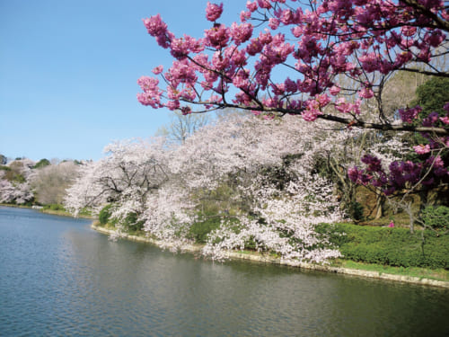 7位:三ツ池公園【神奈川県】