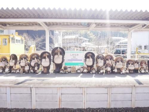信楽高原鐵道の「信楽」駅に到着すると、信楽焼のたぬきが一列になってお出迎えしてくれます。