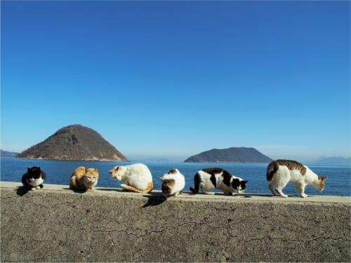 佐柳島、香川県仲多度郡 (C)Mitsuaki Iwago