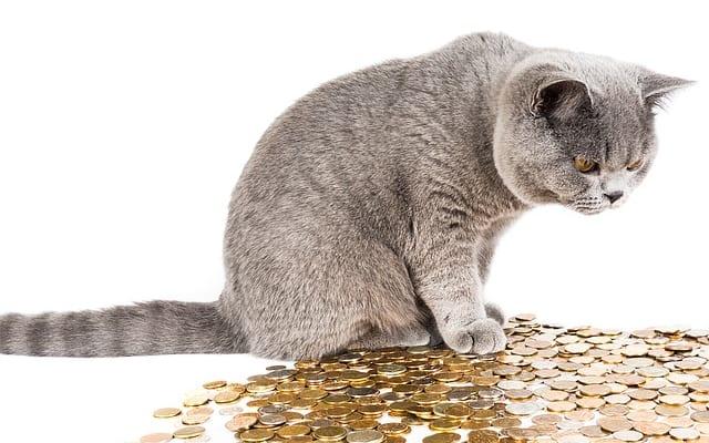 拾った猫の扱いや地域猫活動は法律的にどうなのか?|『ねこの法律とお金』