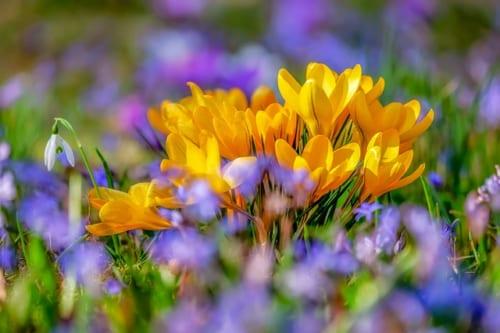 春の体調管理の鍵を握るのは免疫力を上げる「たんぱく質」!