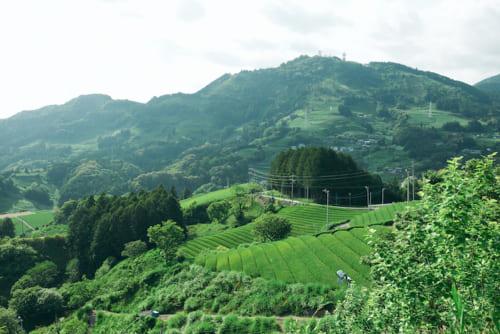 """青々と美しく、思わず見とれてしまう茶草場。遠くに見える粟ケ岳には""""茶""""の一文字が木で表現されています。"""