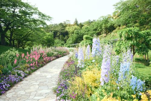 150メートル続く、スマイルガーデンの花々も可憐です。