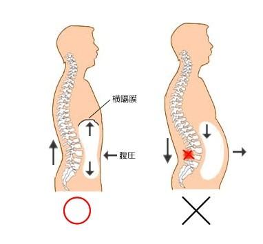 背骨は身体の内部から支えられます