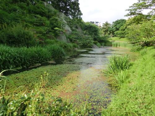 福島正則が廃城にしたとされる湯築城には伊予国守護所が置かれていた