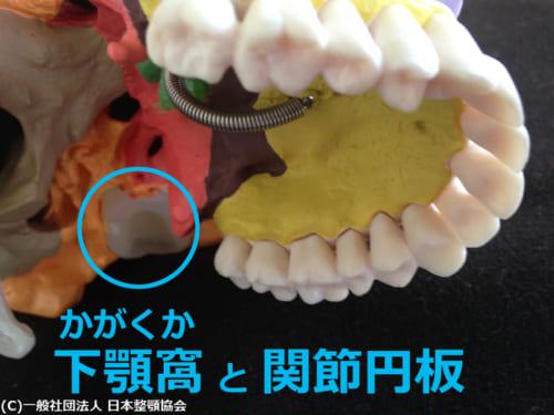 下顎窩と関節円板
