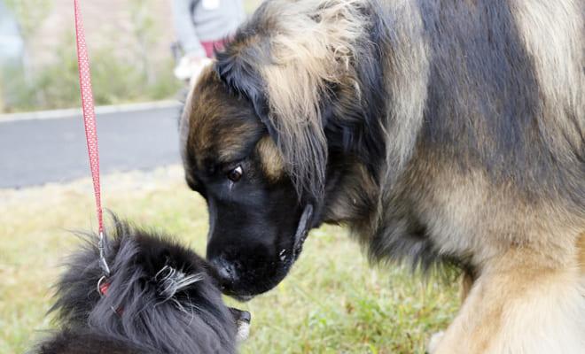 「犬」と相手をののしり合った鎌倉武士の大ゲンカ