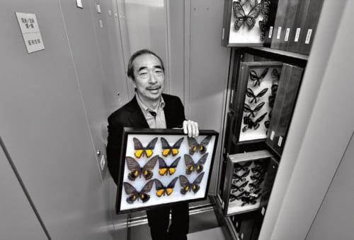 貴重な標本を管理する収蔵庫には3000箱の標本箱が入る。「作家の北杜夫さんが集められた標本も生前からお預かりしています」