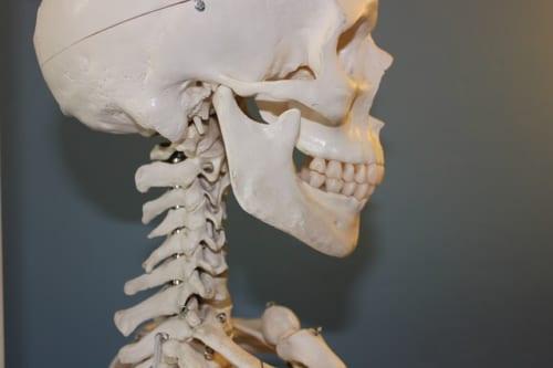 無意識に片側だけで噛んでいると頭蓋骨にひずみが!?