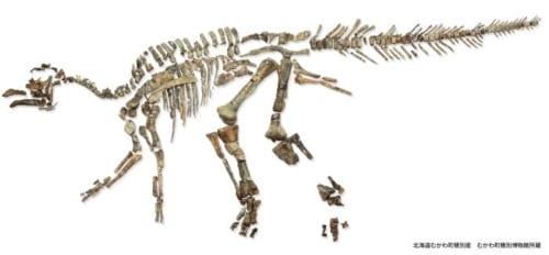 「むかわ竜」全身実物化石 北海道むかわ町穂別産 むかわ町穂別博物館蔵