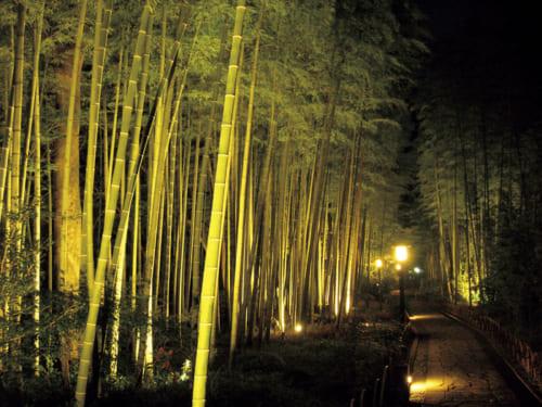 10位:【静岡県】竹林の小径