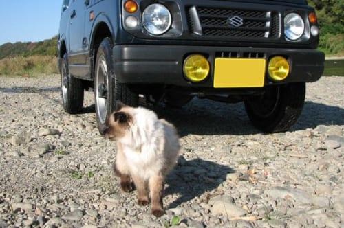 愛車と愛猫「まなつ」ちゃんとの一枚。猫を飼っているクルマ好きなら、憧れる光景です